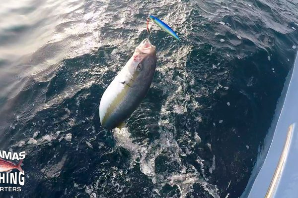 Kingfish 1AdamasFishingChartersFeb